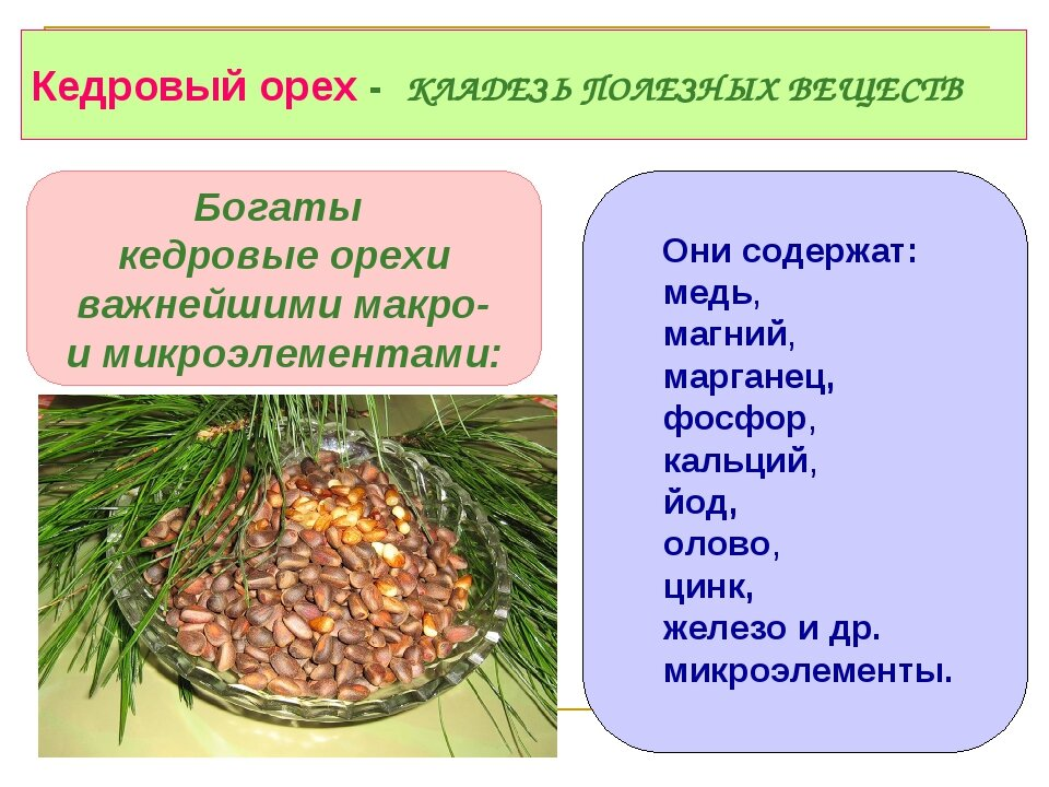 Кедровые орехи: польза и вред для мужчин, как употреблять с медом и другими продуктами