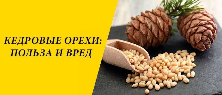 Польза и вред кедровых орешков | poweredhouse | яндекс дзен