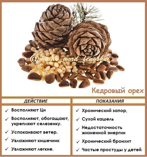 Польза кедровых орехов для организма женщин и особенности применения