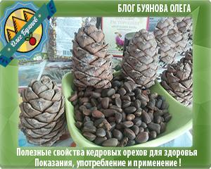 Польза кедровых орехов и противопоказания