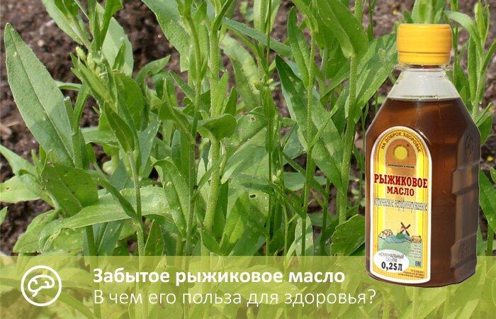 Рыжиковое масло в медицине и косметологии — польза природы!