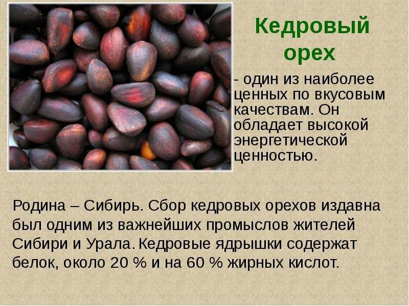 Польза и вред кедровых орехов для женщин: свойства и возможные противопоказания