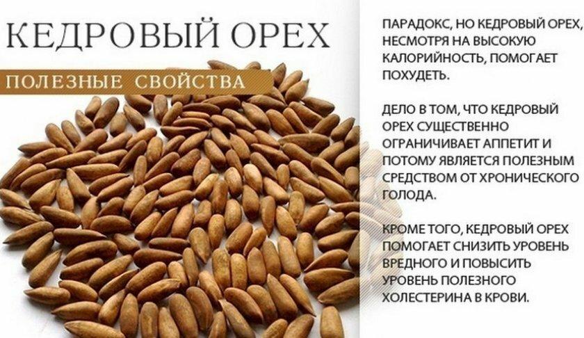 Чем полезен кедровый орех для организма женщины: возможный вред