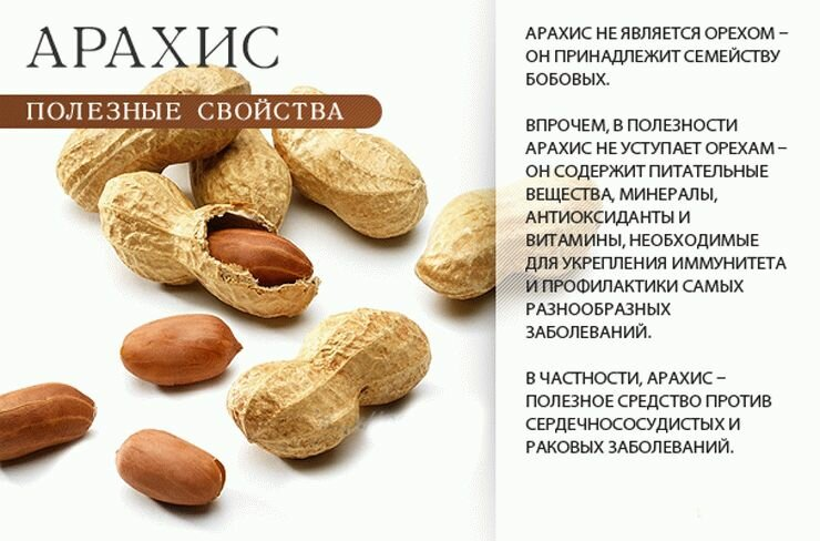 Несомненная польза кедровых орехов для женщин и их уникальный состав